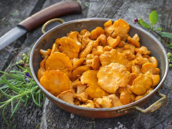 Калорійність грибів на 100 грам, БЖУ, користь і шкода для організму людини