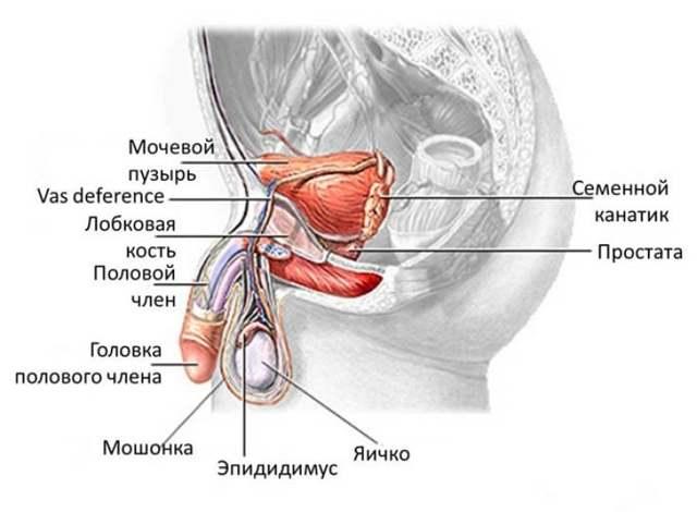 Епідидиміт у чоловіків або запалення придатка яєчка: симптоми і лікування