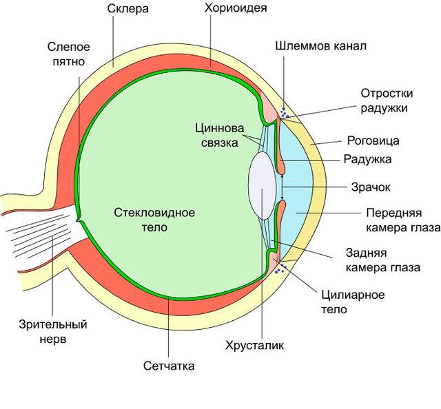 Алергія на очах: діагностика, симптоми і лікування