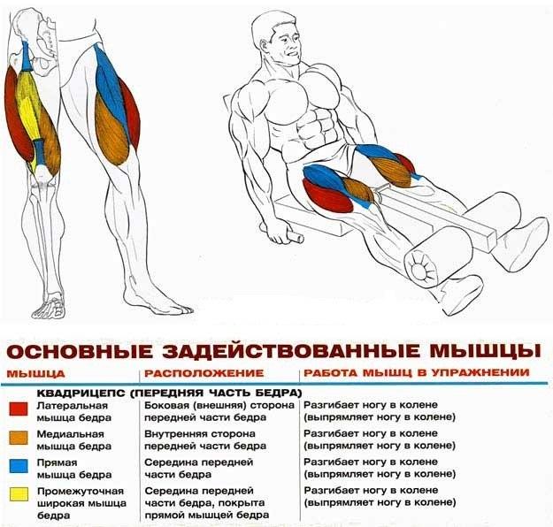 Згинання та розгинання ніг в тренажері: техніка виконання