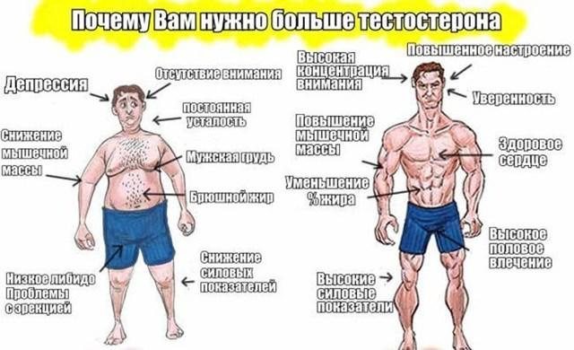 Продукти, що містять чоловічі гормони і список знижують рівень тестостерону